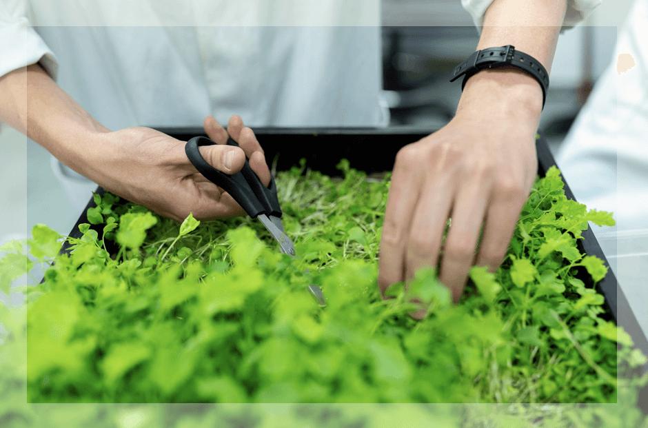 Create vegan jobs